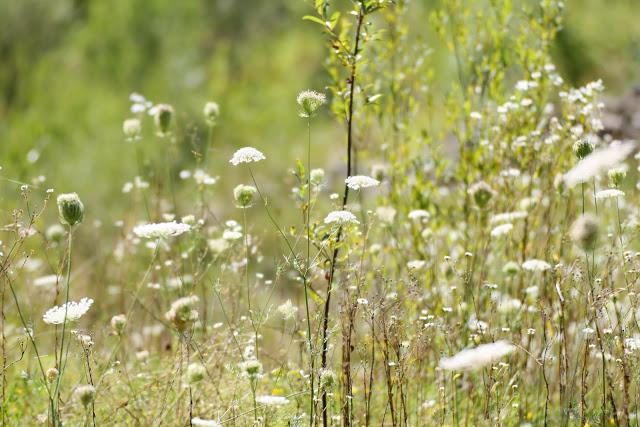 Allgäu, Blumenwiese im Sommer