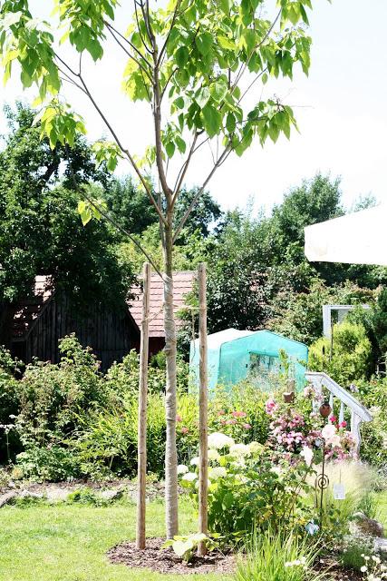 Garten und Catalpa im Juni
