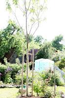 Catalpa und Garten im 12 tel Blick Mai