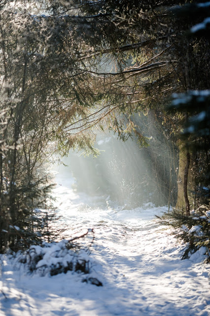 Wettenberger Ried, Winterwald, Pomponetti