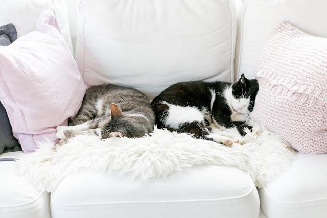 Catlife, Pomponetti