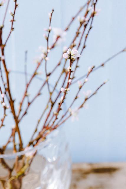 Pfirsichblüten, Friday Flowerday, Pomponetti