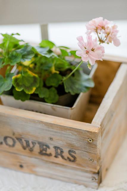Cozy Livingroom oder Lieblingsecke Wohnzimmer, Pomponetti, Pelargonien