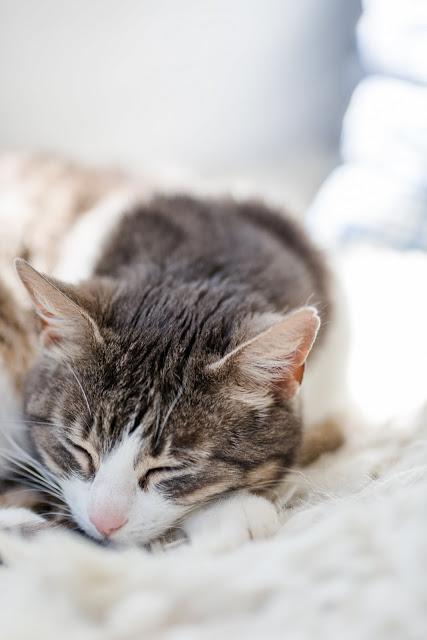Cozy Livingroom oder Lieblingsecke Wohnzimmer,Katzenmädchen, Pomponetti