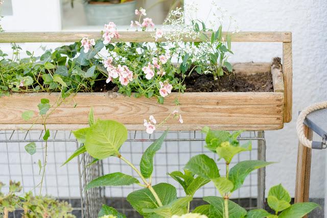 Gartenimpressionen, Sommerbepflanzung, Pomponetti, alter Hennentrog aus Holz bepflanzt