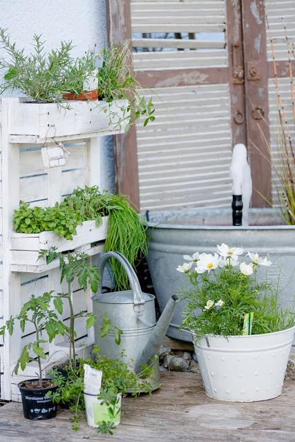 Sommerbepflanzung, Pomponetti, Kräuterpalette
