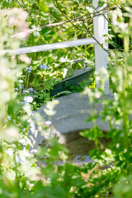 Sommerbepflanzung, Gartenimpressionen,Pomponetti, altes Fenster mit Spiegel im Garten