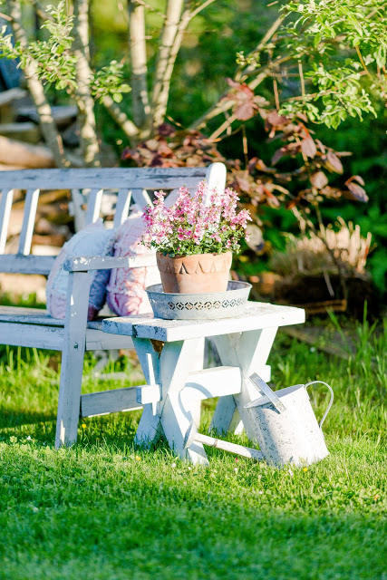 Gartenglück Ende Mai, Pomponetti,