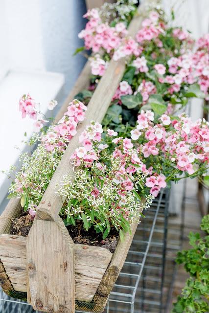 Gartenglück Ende Mai, Pomponetti, Elfensporn mit Euphorbium