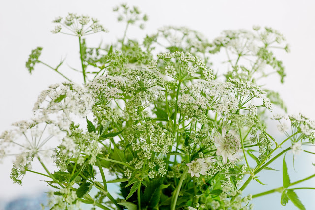 Von Unkraut- Upcycling, Regaldeko und tierischen Nachbarn, Pomponetti, Giersch als Wildblumenstrauß