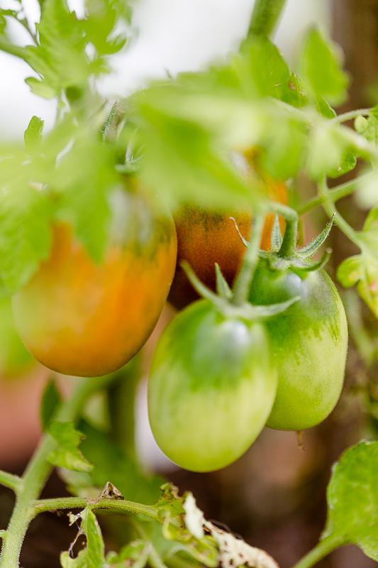 Gemüseanbau auf Balkon und Terrasse, Pomponetti,