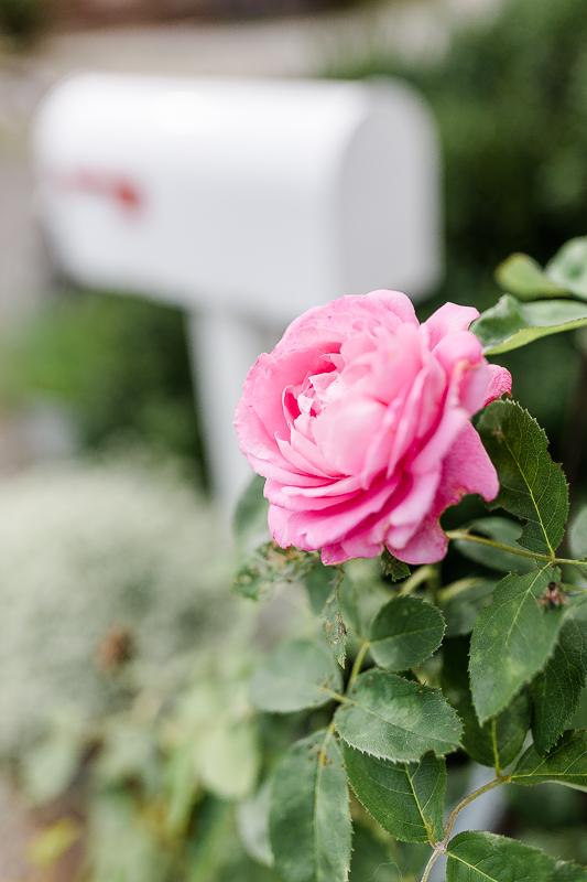 Gartenimpressionen Anfang September, Pomponetti