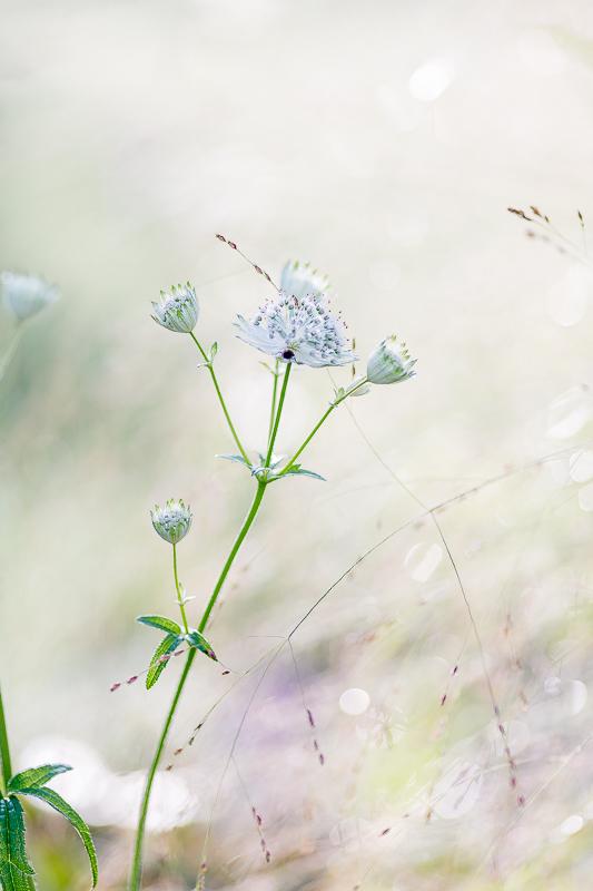 Gartenimpressionen Anfang September, Pomponetti, Sterndolde