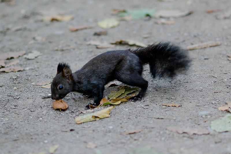 Wienimpressionen oder Park Schönbrunn mit Fotoshooting, Pomponetti, Eichhörnchen