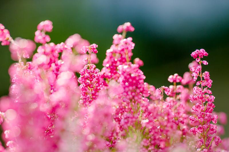 7 Tips gegen den Herbstblues und Wochenendblümchen mit Erika, Pomponetti