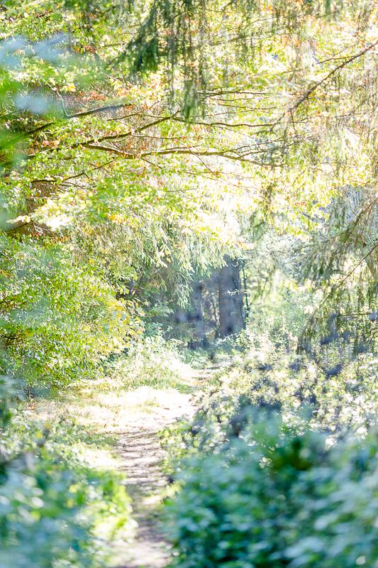 Herbst im Märchenwald, Pomponetti, Wettenberger Ried, Biberach