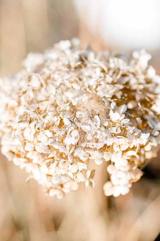 Der Garten im Herbst oder Herbstkranz selbstgemacht, Pomponetti