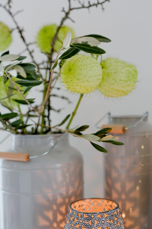 Gomphocarpus oder Baumwoll Seidenpflanze zum Friday Flowerday, Pomponetti,Blumen arrangieren