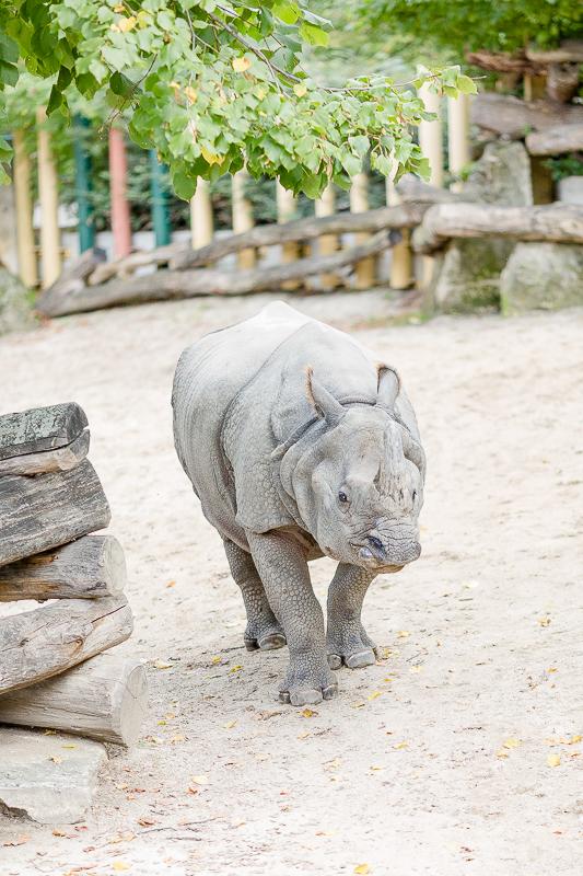 Tiergarten Schönbrunn in Wien, Pomponetti, ältester Zoo der Welt, Nashorngehege