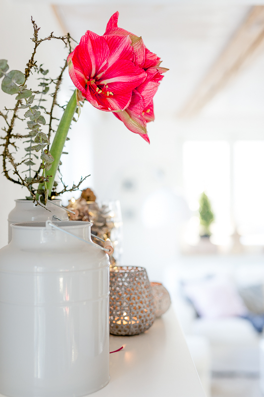 Pinke Amaryllis, Pomponetti, Friday Flowerday