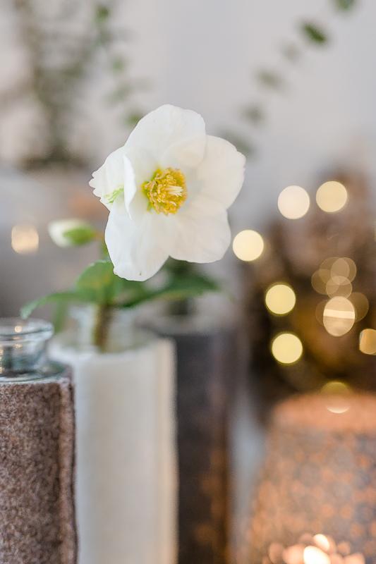 Friday Flowerday, Pomponetti, Christrose