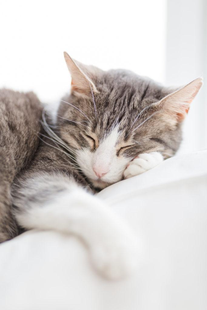 Kuschelhasen und andere Fellnasen, Katzenmädchen, Pomponetti