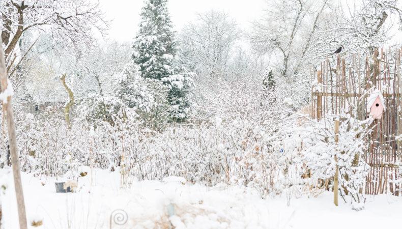 Wintereinbruch im Garten, sowie ein Winterrezept