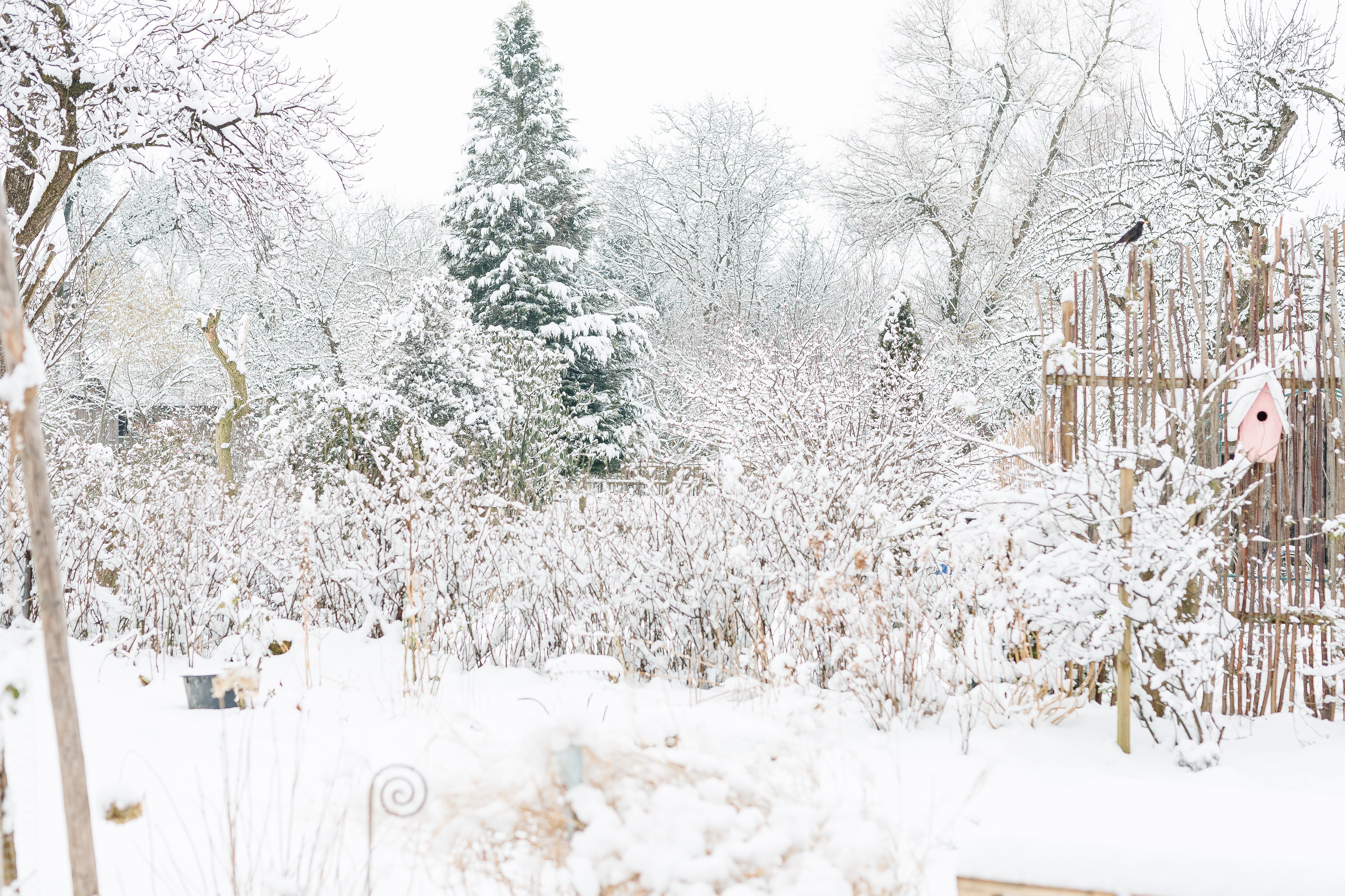 Mein Garten im Februar,Pomponetti