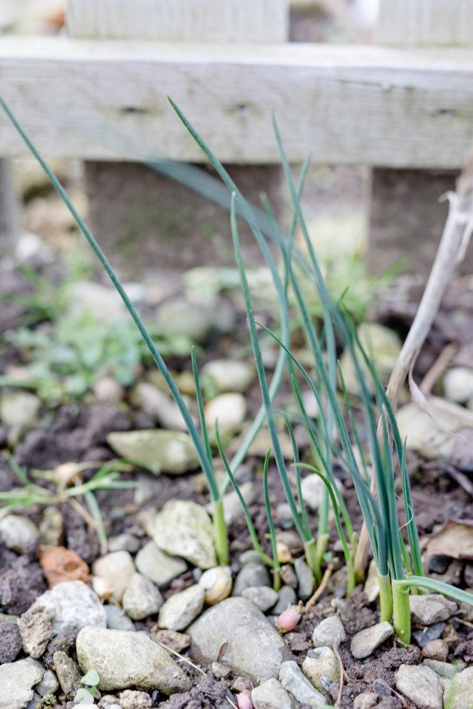 Frühlingserwachen im Garten, Garten im März, Pomponetti
