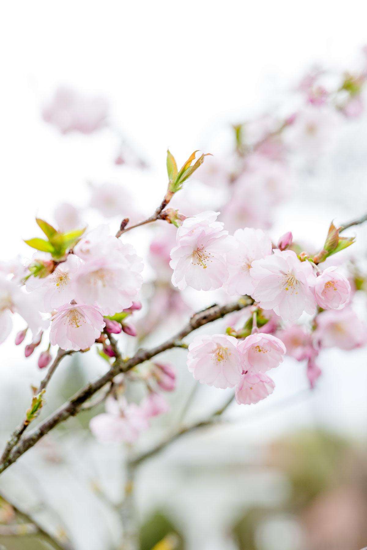 12 von 12 im April, Tagesablauf, Pomponetti