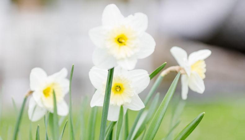 Gartenimpressionen oder mein Garten im April