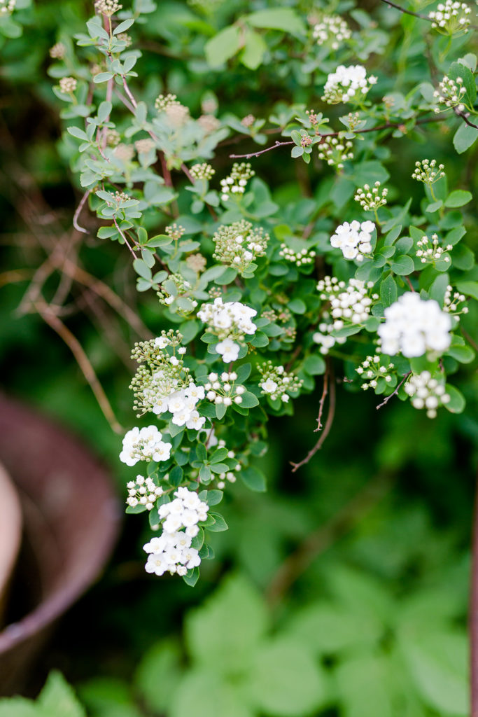 Hängeerdbeeren in Palette und andere Gartenideen, Pomponetti