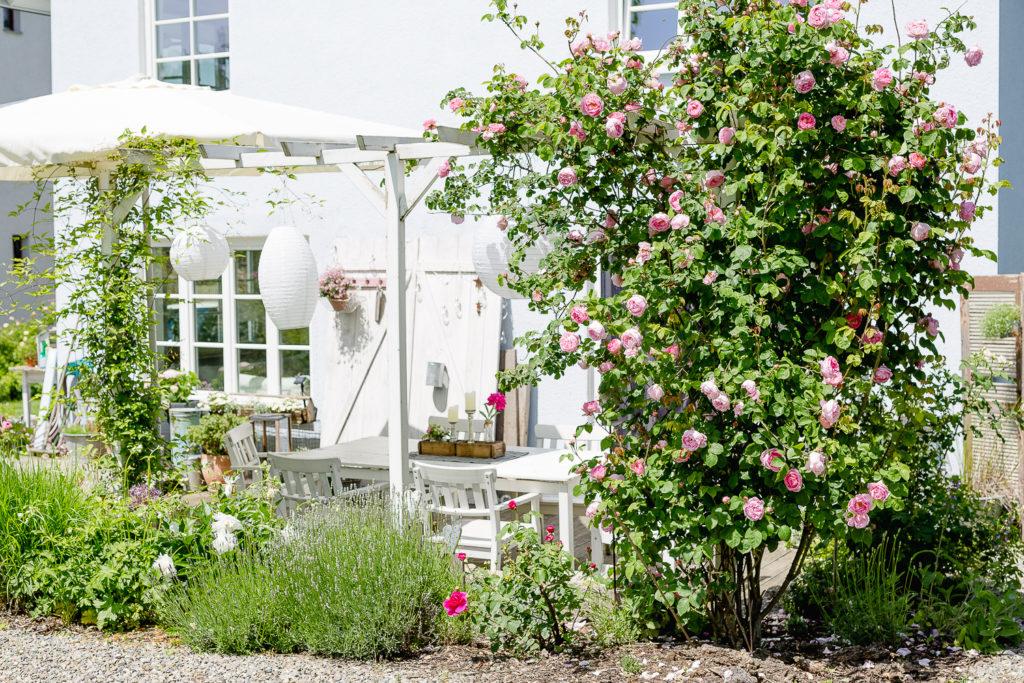 Märchenhafte Rosenzeit, Gartenimpressionen,Pomponetti