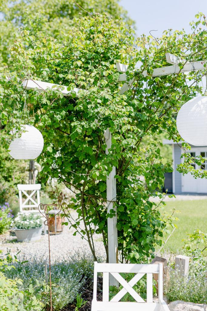 Weekendflowers im Garten, Pomponetti