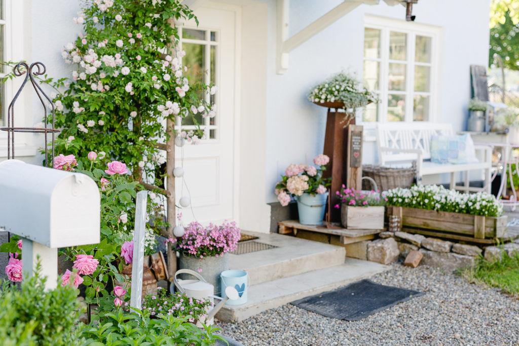 Eine Auswahl der schönsten Rosensorten, Pomponetti, Pauls Himalayan Musk am Eingang
