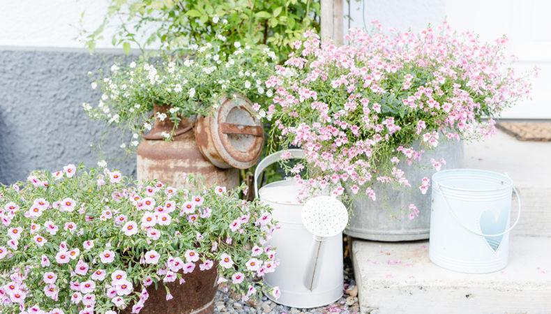 Sommerstrauß in Pink und mein Sommergarten