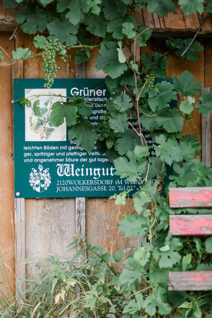 Sommerfeeling im Weinberg oder Weinreise Wien, Pomponetti