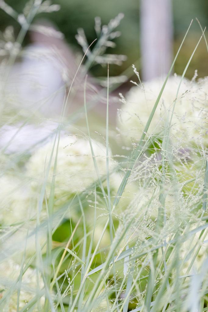 Spätsommer oder mein Garten Ende August, Pomponetti