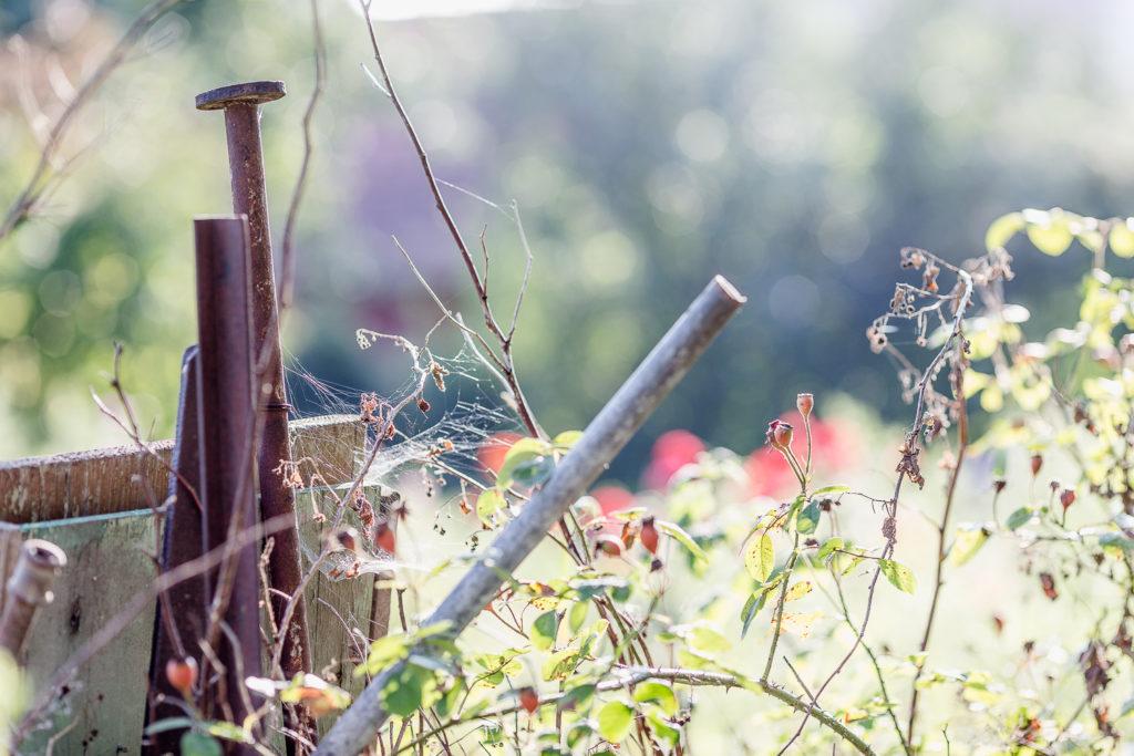 Herbstzauber... Gartenimpressionen Anfang September, Pomponetti
