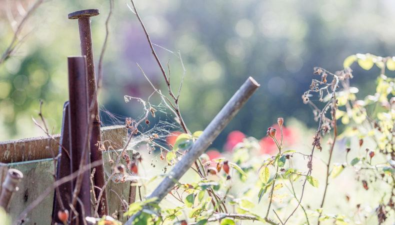 Herbstzauber… Gartenimpressionen Anfang September