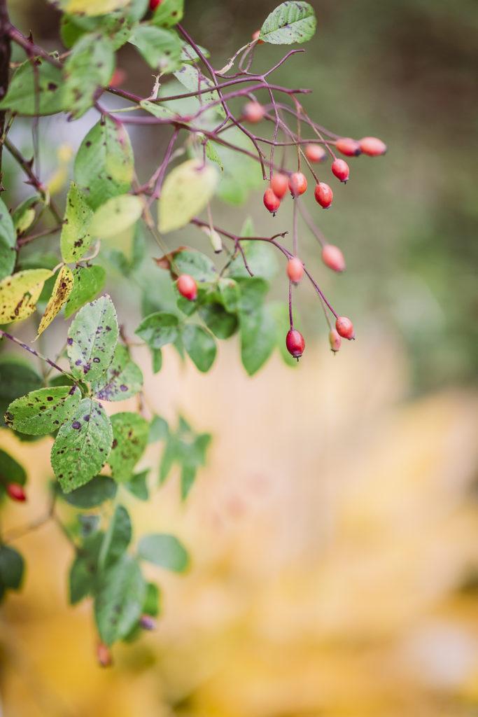 Herbsttage, Pomponetti