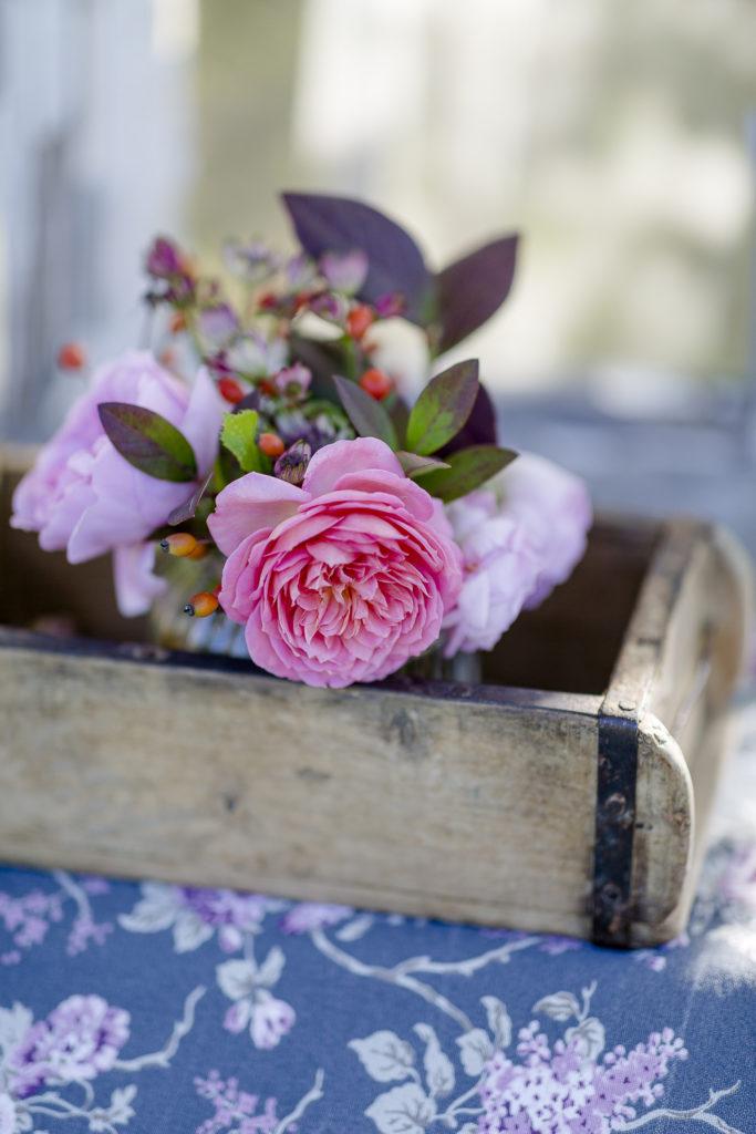 Die letzten Herbstrosen zum Friday Flowerday, Pomponetti