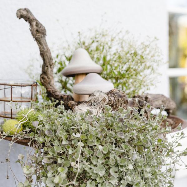 Vogelfütterung oder Garten im Wintermodus, Pomponetti