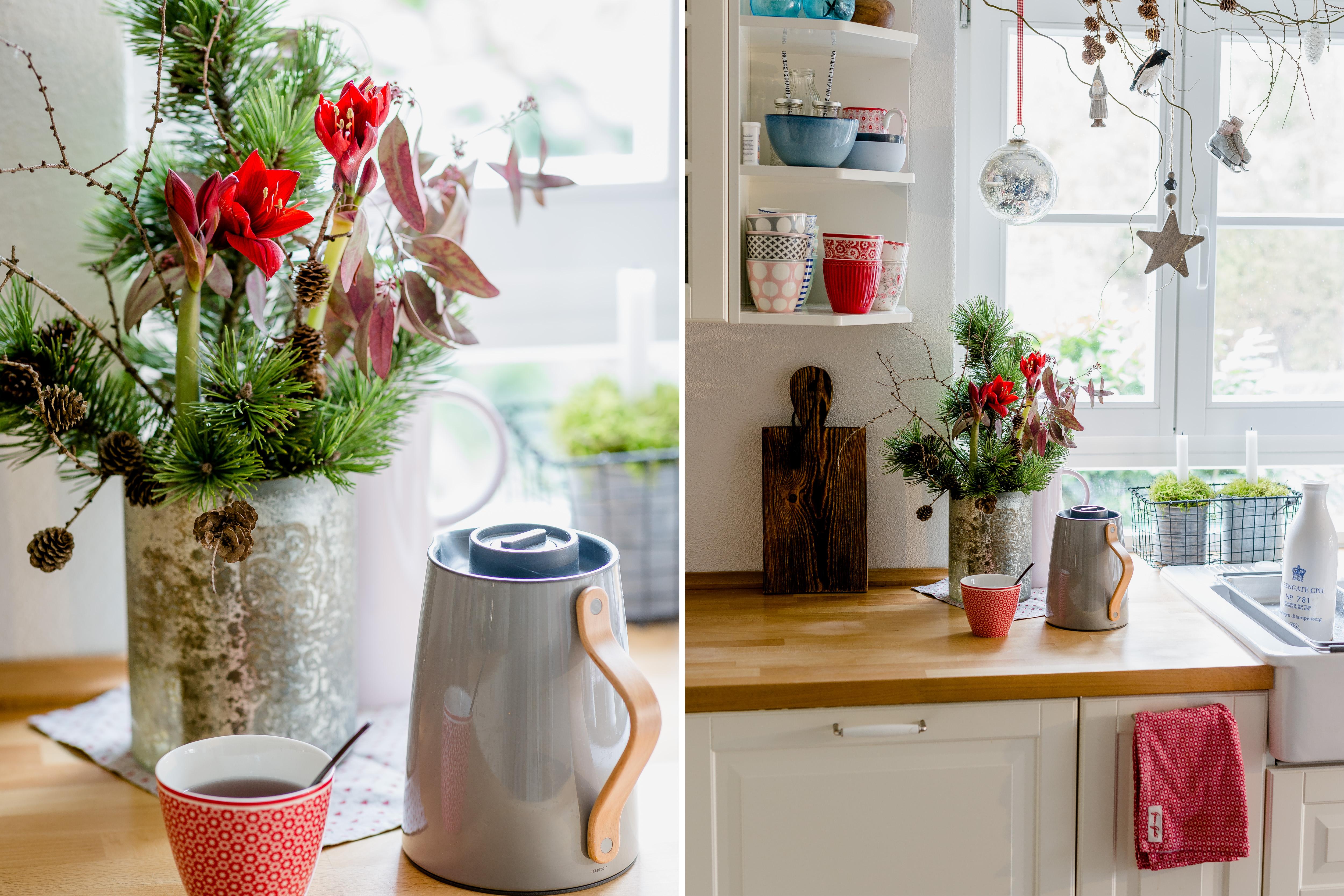 Kleine Amaryllis für die Weihnachtsdeko in der Küche, Pomponetti