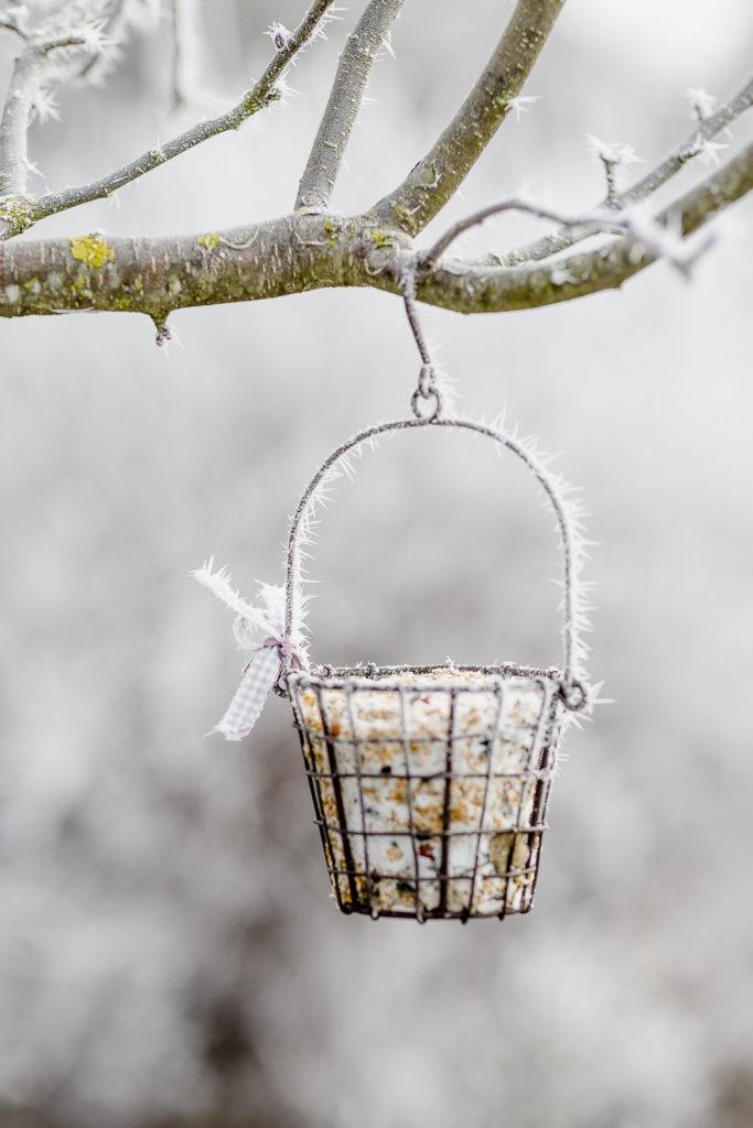 Zauberhafter Raureif im Dezembergarten, Pomponetti