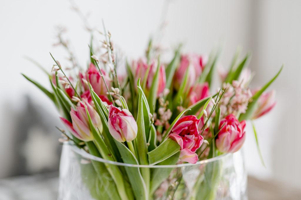 Die Besten Pflanzen Furs Schlafzimmer Oder Tulpengluck Pomponetti