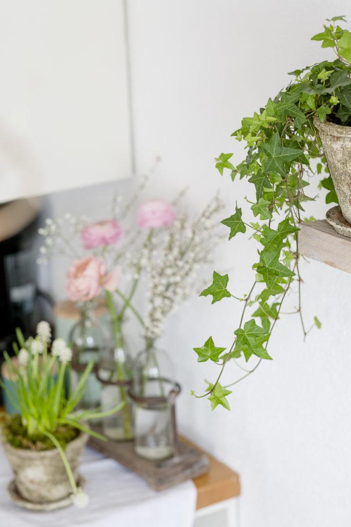 Sanfte Frühlingsbrise im Februar mit zarten Farben, Pomponetti