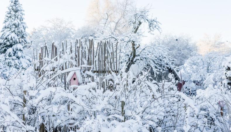 Winter Wonderland im Februargarten