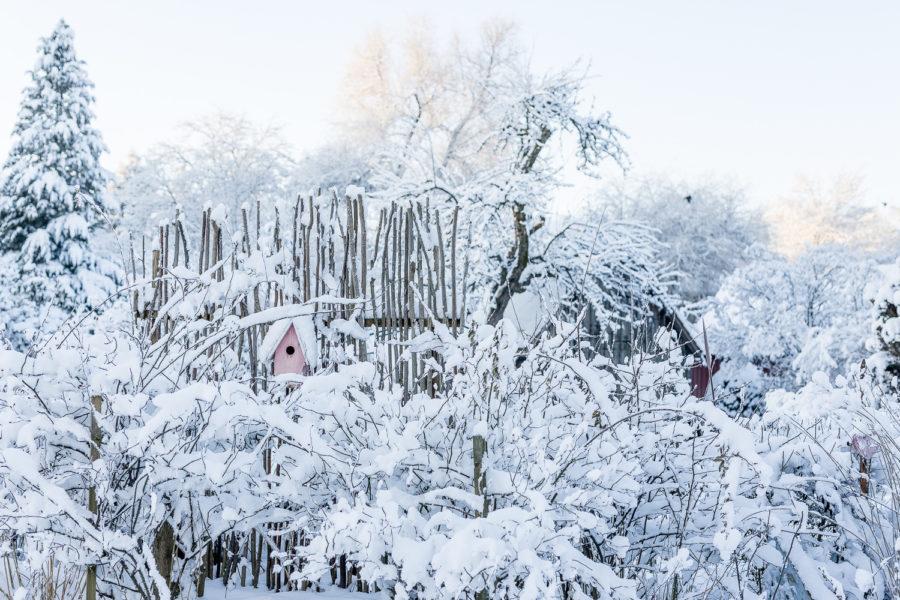 Winter Wonderland im Februargarten, Pomponetti