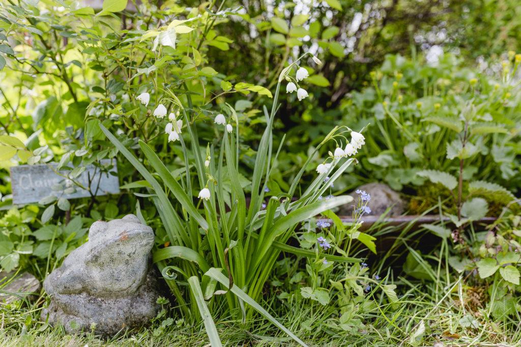 Gartenglück im Mai, Pomponetti